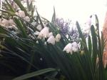 Spring snow flake