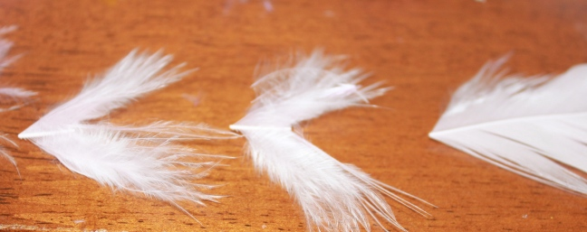 The feather sections as used on each bird, (wing wing tail)